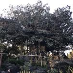 Robinson Treehouse