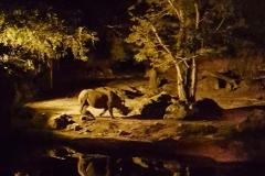 animal-kingdom-nacht-12