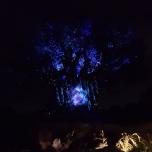 Tree of Life im Animal Kingdom