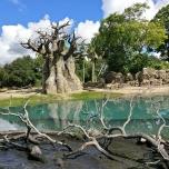 Landschaft bei der Kilimajaro Safari
