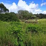 Safari im Animla Kingdom