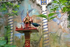 animal-kingdom-61
