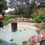 animal-kingdom-lodge-11