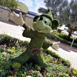 Mickey Mouse Buchsbaum