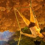 Tarzan im Foret de l'Enchantement
