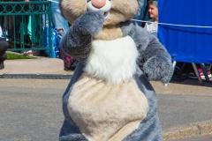 Klopfer / Thumper