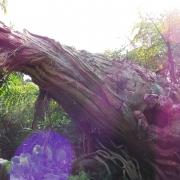 Pflanze auf Pandora