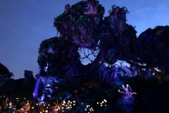 Pandora bei Nacht