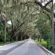 Magnolia Street in St. Augustine