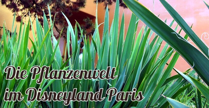 Pflanzenwelt im Disneyland Paris - made in Germany