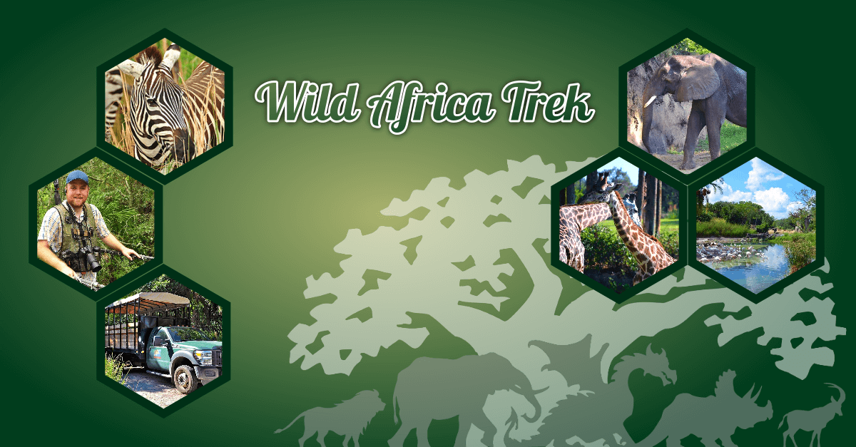 Teaser-Bild zur Wild Africa Trek in Disney's Animal Kingdom