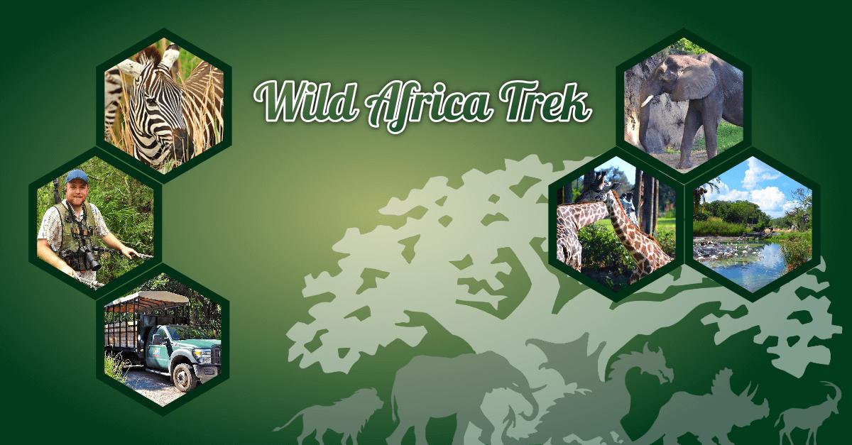Teaser-Bild zur Wild Africa Trek in Disney's Animal Kingdom