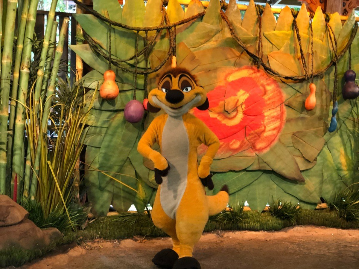 Timon in seiner neuen Meet & Greet Location