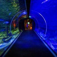 Tunnelaquarium zum durchlaufen