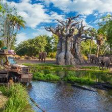 Ein Fahrzeug der Kilimanjaro Safaris fährt durch ein offenes Gelände mit Wildtieren