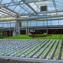 Blick auf den Anbau von Salat im The Land-Pavillon in Epcot