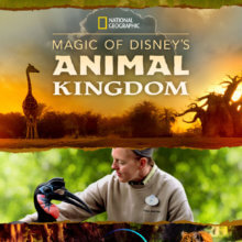 Das Serienposter zur neuen National Geographic Serie über die Tiere aus Walt Disney World