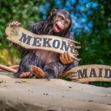 """Affe sitzt auf gekaperten Schiff, hält zerbrochenes Schild """"Mekong Maiden"""""""
