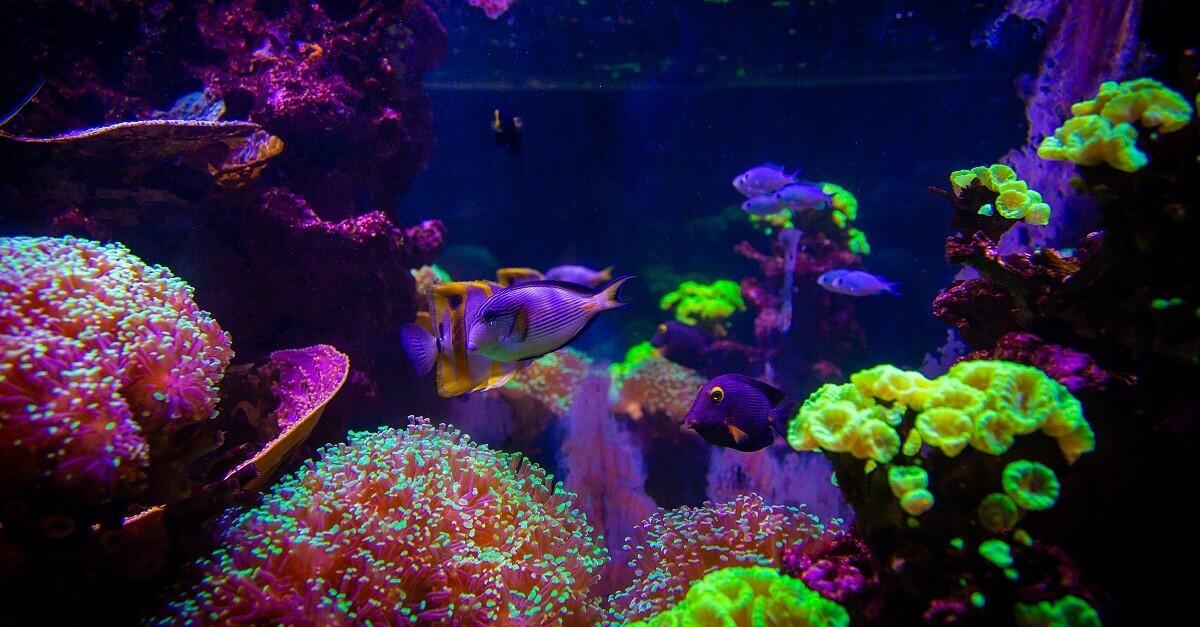 Fische und Korallen im Sea Life im Val d'Europe
